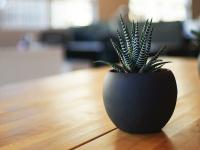 talrose.ch
