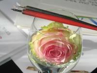bluechilli.ch