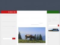 wohnmobil-miete.ch